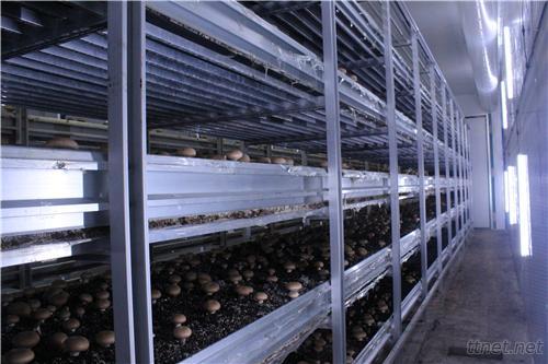 Aojit Mushroom Development Co., Ltd