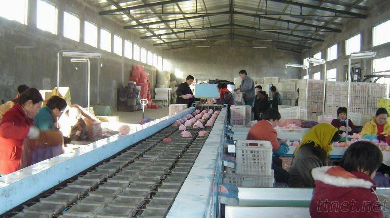 Qixia Xiangyu Fruit And Vegetable Co., Ltd.