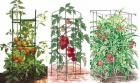 Tomato Support - To Get Excellent Tomatoes Harvest