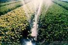 Sprinkler Hose System