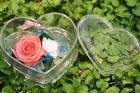 보존한 꽃