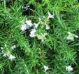 Rosemary Leaf Extract Carnosic Acid