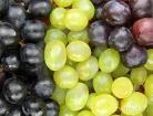 Fresh Globe Grapes