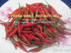 Verse Rode Spaanse peper, Hete Spaanse peper, Kleine Rode Spaanse peper