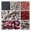 New Crop Mottle Beans, China New Mottle Beans, New China Mottle Beans