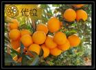 Nombril orange