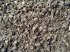 やし穀粒の貝