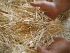 Paja del trigo
