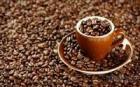 Robusta Luwak Coffee / Civet Coffee