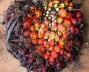 Natural Cheap Palm Kernel