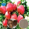 Pomegranate hull Extract