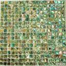 زيلاندا [أبلون] [بوا] قشرة قذيفة فسيفساء [فسم8005], قشرة قذيفة فسيفساء, [سشلّ] فسيفساء