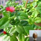 Andrographis Paniculata P. E., Andrographis Paniculata, Andrographis Paniculata Extract