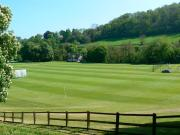 Cricket Field Turf