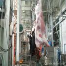 Hydrualic Type Cattle Skin Removed Machine