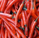 Capsaicinoids