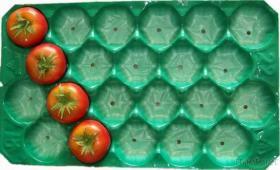 FDA, die 39X59Cm pp. Plastikfrucht-Behälter prüft
