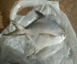 인기 상품 은 병어 및 백색 식용 물고기 의 언 가죽 재킷 전체적인 원