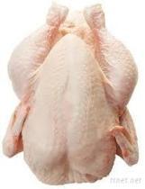 [هلل] دجاجة