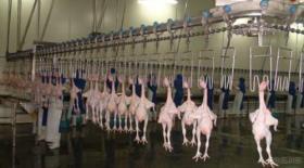 家禽の鶏のアヒルの虐殺装置