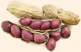 Natural Cheap Peanuts (Groundnut) From Africa