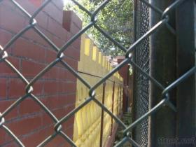 ポリ塩化ビニールの上塗を施してあるチェーン・リンクの金網