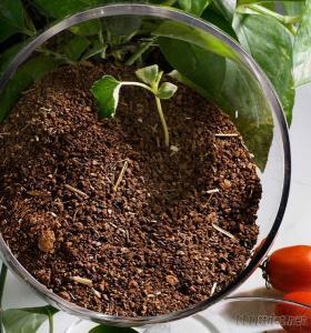 Organic Molluscicide Tea Seed Meal
