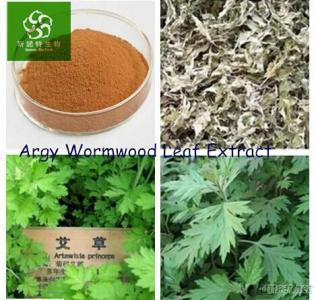 Artemisia Annua (Wormwood)P. E., Wormwood Extract/Extract Powder