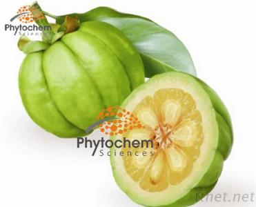 Natural HCA Of Garcinia Cambogia For Weight Loss