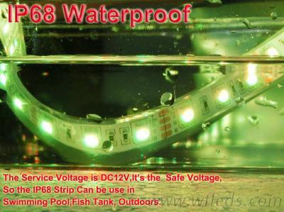 Silicon Tube LED Flex Strip IP68, FLEXIBLE LED STRIP, IP65 LED STRIPS, Flexible Light LED