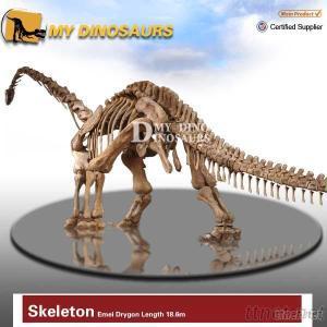 Life Size Dinosaur Skeleton Fossil Model