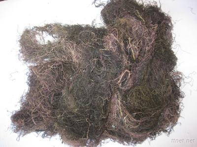 Dried Gracilaria Seaweed