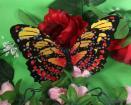 PVC butterfly 3Dbutterfly
