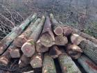 White and red oak logs