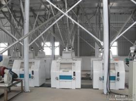 Small Wheat Flour Machinery, Complete Maize Flour Equipment