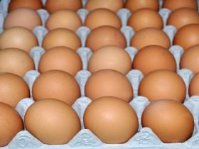 طازج دجاجة بيضات