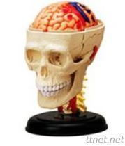 3D Brain+Bone Mould