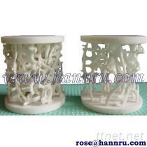 骨骼密度模型