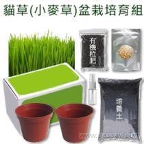 貓草(小麥草)盆栽DIY培養組