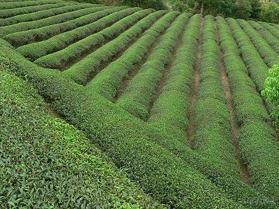 Taiwan Native Tea Co., Ltd.