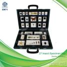 TS0007 27-Insect Specimen Kits Educational Embedded Specimen