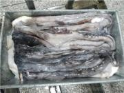 Cleaned Giant Squid Tentacle From China Supplier
