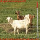 High Tensile Knotted Animal Mesh Fences, Cattle Fence, Cow Fence, High Qulaity Fence