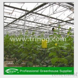 Venlo Agricultural Greenhouse