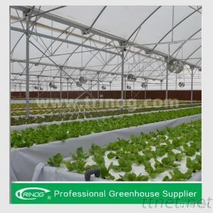 Advanced Hydroponics System For Lettuce
