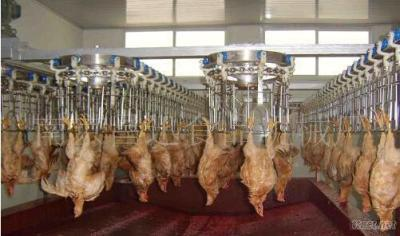 Halal Poultry Processing Production Line Slaughtering Equipment