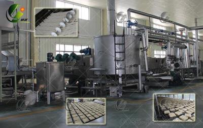 Fried Instant Noodles Manufacturing Plant
