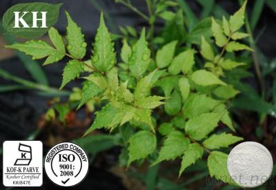 High Purity Vine Tea Extract Dihydromyricetin 98% By HPLC