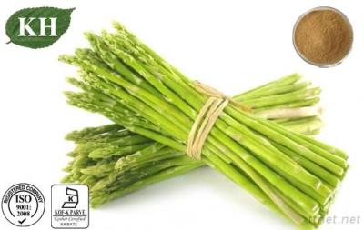 Manufacture 100% Natural Asparagus Extract Asparagoides 4% UV