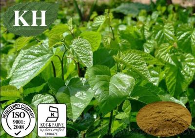 Manufacture 100% Natural Mulberry Leaf Extract 1-Deoxynojirimycin